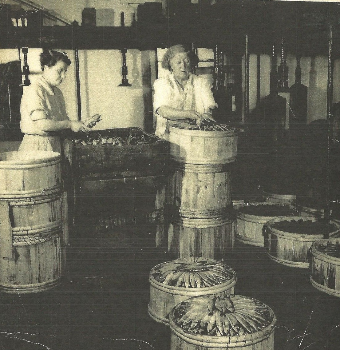 Sardines being packed in the Old Sardine Factory